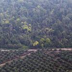 廖內省被清出的林地及棕櫚油林,攝於20214年2月。(攝影:Rhett A. Butler)