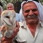 以色列的倉鴞生物防治計畫。