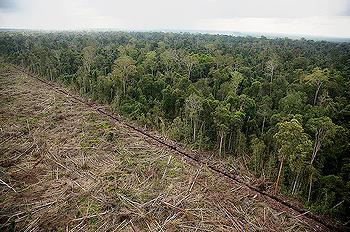 伐木過後的土地,照片來源:ENS