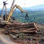 美國奧勒岡州的伐木作業。(照片:Heather Mirassou提供)。