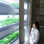 具有「療癒效果」而備受期待的植物工廠。(圖片節錄自朝日新聞)