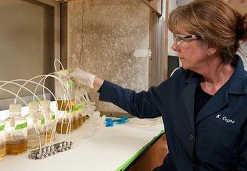 Kathryn Coyne在他的實驗室中培養赤潮異彎藻(照片由德拉瓦大學提供;攝影:Kathy F. Atkinson)。