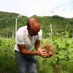 農民展示土壤團塊,指出其中已「沒有生物存在」。攝影:Silvia Giannelli