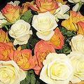 肯亞廉價血玫瑰 圖片提供: Moira