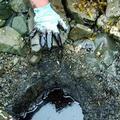 受污染的威廉王子灣海灘下方狀況;圖片來源:艾克森漏油事件處理委員會。