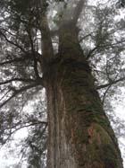 樹。圖片提供:Fresh Air 網站