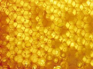 農藥有可能在蜂巢累積好幾年(攝影:Hi Paul)