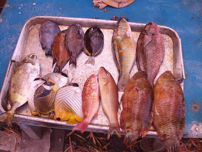 市場中可見的的珊瑚礁魚類愈來愈小;圖片提供:陳昭倫