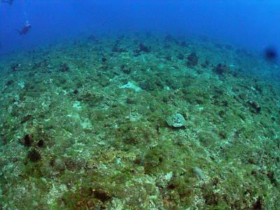 小琉球珊瑚礁現況。圖片提供:陳昭倫