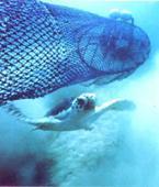 TED 海龜脫逃裝置。圖片來源: NOAA