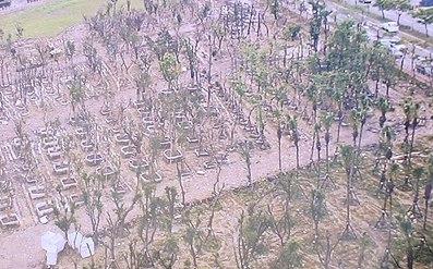 樹木銀行有如墳場。