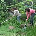環教所利用廢水成立人工溼地,由學生負責溼地的整理維護。