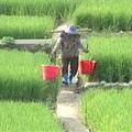 引霄裡溪水灌溉的農田。圖片來源:公視「我們的島」