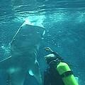 鯨鯊餵食秀