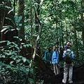 喀麥隆熱帶雨林為世界第二大