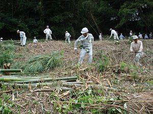 整頓荒廢竹林 國際志工參與明日香村工作假期 | 台灣環境資訊協會-環境資訊中心
