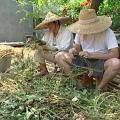 張秋香栽種有機農作物,成為一種堅持,參加農民市集,主要是本著分享的精神