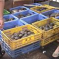 中國的清平市場處處可見台灣龜
