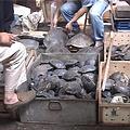 中國吃龜的風潮正熱