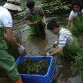 2006年參與陽明山生態工作假期的志工們在二子坪分工拔除外來種、並將它們搬到一旁的樹林中作為天然堆肥。