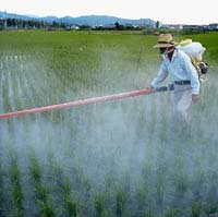 Having a field day with pesticides.