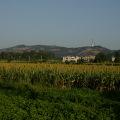 太武山,除了「毋忘在莒」名聞遐邇,還保有豐富原生植物的面貌。