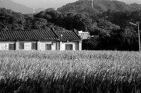 農村的景觀、人情與生活情境是一切人文情感的孕育場所。圖為南埔。