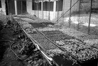小瓢蟲農場