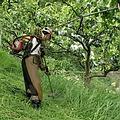 女農阿寶2