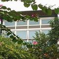 生態綠建築的思潮來襲代表了人類對於自然環境的尊重(照片來源:公共電視-我們的島)