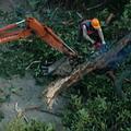 面對市民的種種疑慮,市府一面召開說明會進行溝通,但是砍樹整建工地的行動,卻在背後展開