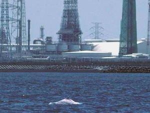白海豚棲地緊鄰沿海工業區圖為台塑六輕(楊世主提供)