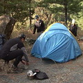 在同一地點連續紮營5個晚上,當地的植物就無法正常生長