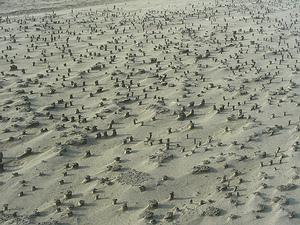 海洋公園北堤的北側佈滿成千上萬螻蛄蝦洞穴遺址