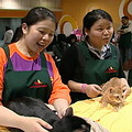 台北市流浪貓保護協會志工