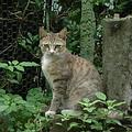 每隻街貓,都有一段悲慘的過去