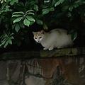 街貓因為天性使然,不如流浪狗容易被人們注意