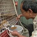 固定餵食街貓的善心人,相對有義務必須為街貓結紮