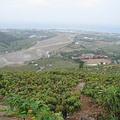 屏東縣枋山鄉,是台灣愛文芒果的重要產地
