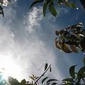 果園的天空