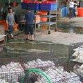 後勁溪沿岸的污染源除了工業污水、家庭和畜牧廢水,還有雞鴨屠宰場的污水。(照片來源:李根政攝)