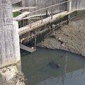 右昌大排下污濁含有油污的水。(照片來源:薛淑文攝)