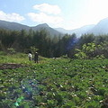 賴盈羽的桃醉農場菜園