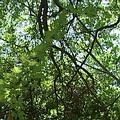 從人類的觀點是荒廢閒置,但在生物的眼中,茂密的次生林是個天堂
