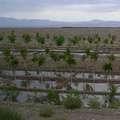 中國西北部的水資源與灌溉