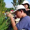 「台中市豐樂實驗學校」前來參加「尋訪水稻家族」活動方案,實地觀察野生稻的情形
