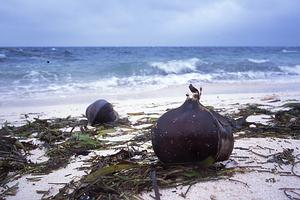 植物相以熱帶性海岸灌叢為主