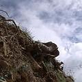 山頭有被砍伐過的痕跡