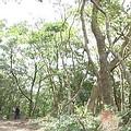 一棵50年壽命以上的大樹在生態上所產生的周邊效益,超過4千萬元以上