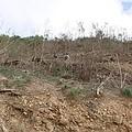 徹底解決山坡地的問題,要從中央的林業政策通盤檢討